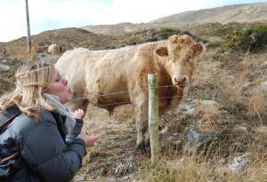 Durrus Cow
